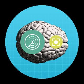 1_hjerne
